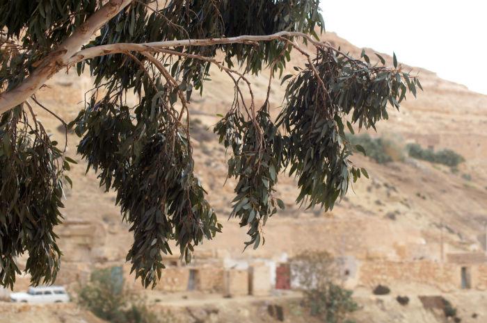 Djerba Reisetipps Baum
