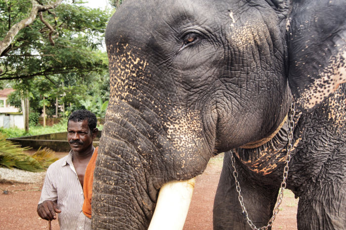 Urlaub in Indien Elephant