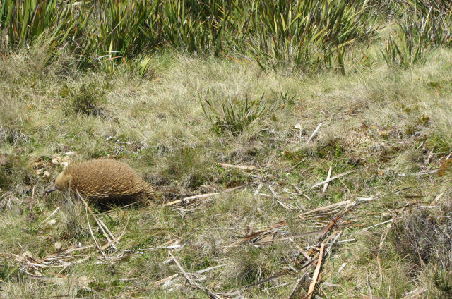 Tasmanien Reise 9