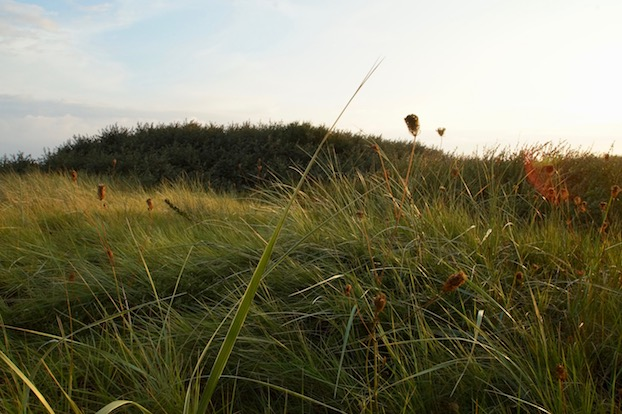 Ostfriesland-Meer-Schilf
